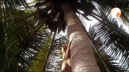 أفلام وثائقية |  مدرسة القردة