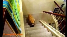 Funny Dog Videos - Funny Cat Videos - Funny Naughty Dog - The Best Funny Dog and Cat 2015 #2
