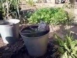 Ce chat prend un bain dans un pot de fleur