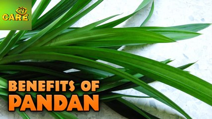 Health Benefits Of Pandan | Care Tv