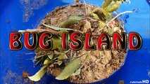 Bug Island 27 - Rove Beetle (*) - Super Macro