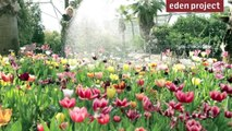 10 tips for gardeners in April from the Eden Project