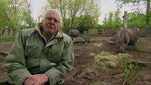 Curiosités Animales: Des Animaux A Armure, Le Rhinocéros & Le Hérisson