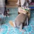Un lapin pervers harcèle un pauvre chat