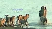 besst animals video. Biggest wild animal fights   CRAZIEST Animals Attack Caught   Crazy an animals attack.