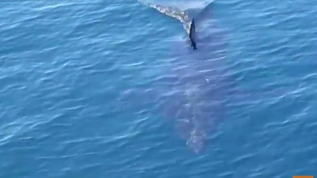 Fishermen See Great White Shark Up Close Off Chatham