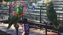 O jornalista decidiu entrevistar dois papagaios... O que este papagaio fez... Inacreditável!
