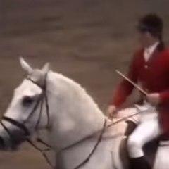 O recorde mundial de salto a cavalo