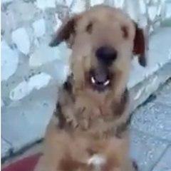 ¡Este perro sabe contar!