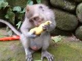 Indonesie - Bali - Ubud - Monkey Forest