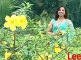 Konkani Song by Nephie Rod From VCD Dessak Bhetoi (2011)