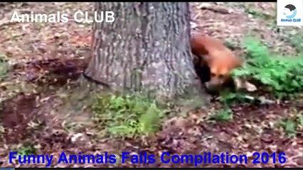 Funny Pets Videos ► Funny Animals Fails Compilation 2016 ► Animals CLUB