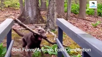 Funny Pets Video ► Funny Animals Fails Compilation ► Animals CLUB