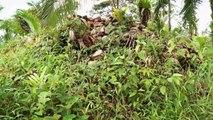 Chemins d'école, chemins de tous les dangers - Nicaragua