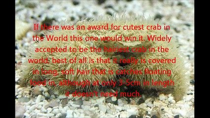 The World's Top 10 Most Amazing Crabs