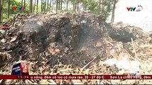 Đồng Nai: Nhức nhối tình trạng rác thải công nghiệp được mang đi đổ trộm từ tỉnh này sang tỉnh khác tại khu vực giáp ranh.