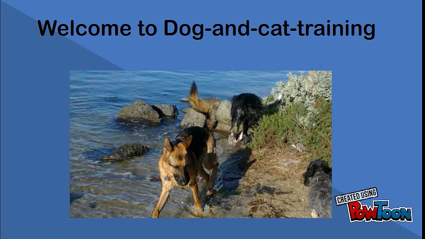 Obtain Best Dog Trainers for Dog Treats