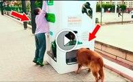 Máquina alimenta animais abandonados por cada garrafa que é reciclada! Que achas desta iniciativa?