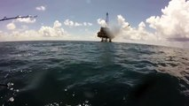 Très rare ! Un requin tigre attaque un requin marteau