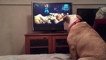 Un chien aboie devant un film pour mettre en garde l'un des personnages