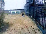 funny videos - Pigeon Fakes Death To Escape Funny Videos