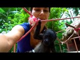 Orphaned Baby Howler Monkeys Hang Out and Play