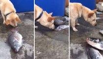 Köpeğin Balıkları Hayatta Tutma Çabasına Şaşıracaksınız
