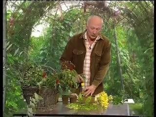 Visionnez les Cours Vidéo de Arbustes- Conseils de Jardinage