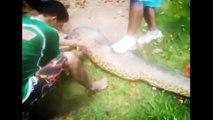 Most Amazing anaconda Attacks - Anaconda Vs Dog, Anaconda Vs Deer, python