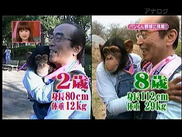 天才!志村どうぶつ園 17 07 2010