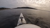 Australian Kayaker Has Close Encounter With a Great White Shark