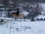 Fuego mon poney fjord , mon cheval au galop sur la neige !