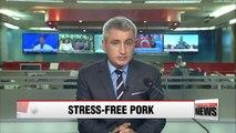 Korean 'animal welfare farm' provides pigs with creature comforts