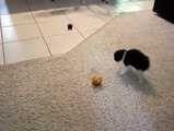 A little ball of fuzz tries to Intimidate the Ball