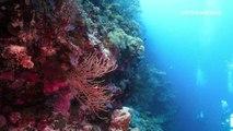 Deep Sea Drugs Full Length