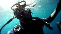 Plongée sous-marine - Réserve Naturelle de Banyuls - Epave Astrée - 2016