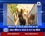 Video viral in india That Pakistani GeoNews reporter interview a buffalo_Indian Media report