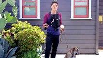 Une appli pour faire ramasser les cacas de vos chiens dans la rue... La bonne blague