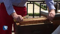 Une semaine sur les toits de Paris: cultiver son potager