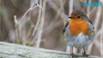 Are Bird Feeders Killing Birds? It's Not What You Think.