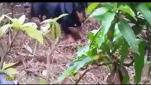 When Animal attacks Compilation 2016  Most Amazing Wild Animal Attacks dog vs snake
