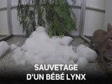 Un petit lynx s'éclate dans de la neige artificielle