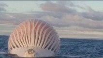 Océan Indien: Des pêcheurs trouvent cette énorme boule en plein océan. La photo a fait le buzz !