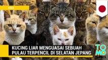 Ini dia pulau kucing, pulau yang dikuasi oleh kucing-kucing liar - Tomonews