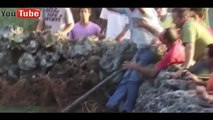 Most Awesome BullFighting Festival -Try Not to Laugh Crazy Bull Fails