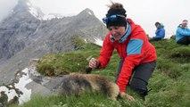 Des randonneurs deviennent amis avec des marmottes dans les Alpes Suisses