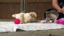 Sauvé d'une usine de chiots, ce petit toutou partage maintenant de bons moments avec son meilleur ami
