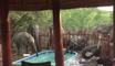 Quand un troupeau d'éléphants vient squatter votre piscine...