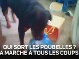Astucieux : un chien qui ramasse les poubelles...
