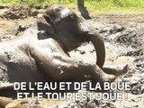 L'éléphant qui aimait les bains de boue